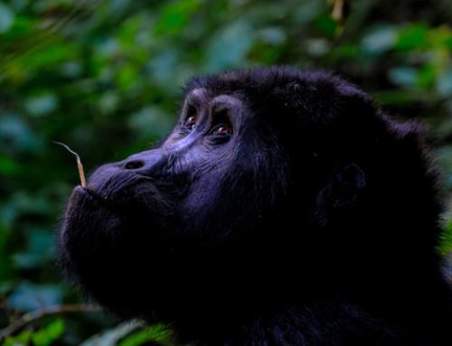 7 Day Rwanda Safari