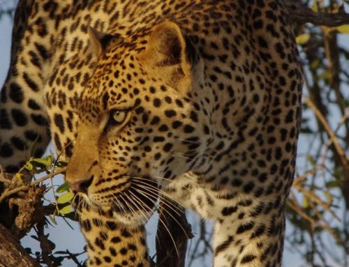5 Day Queen Elizabeth And Lake Mburo National Park Safari, Uganda